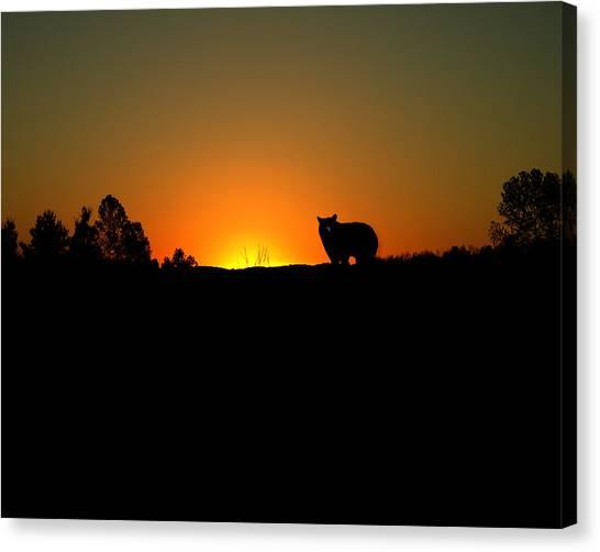 Black Bear Sunset Canvas Print