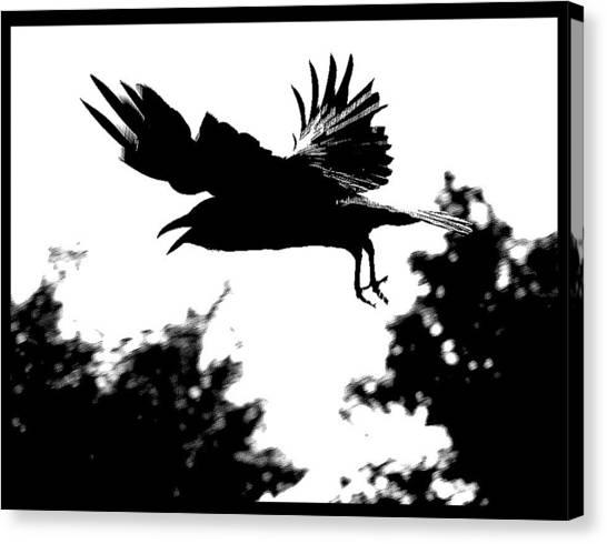 Black Bird Number 2 Canvas Print