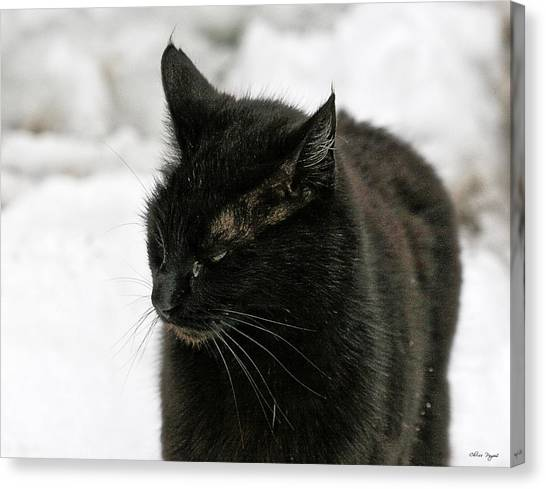 Black Cat White Snow Canvas Print