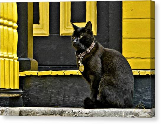 Canvas Print featuring the photograph Black Cat Yellow Trim by Williams-Cairns Photography LLC