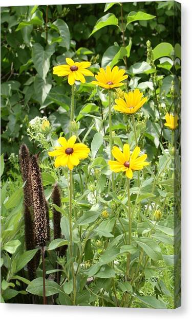 Black Eyed Susan I Canvas Print by Mike Lytle