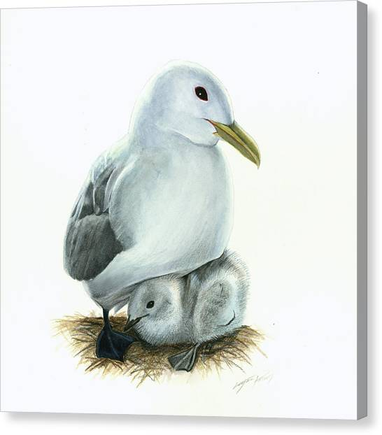 Black-legged Kittiwake Parent And Chick Canvas Print by Logan Parsons