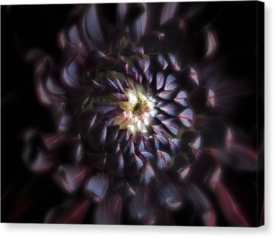 Black Purple Dahlia - Flower Photograph Canvas Print by Artecco Fine Art Photography