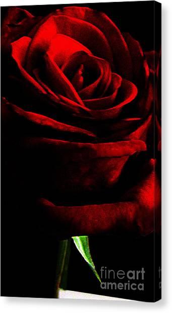 Black Shadows On Red Rose Canvas Print by EGiclee Digital Prints