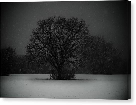 Black Snow Tree Canvas Print by Sonja Quintero