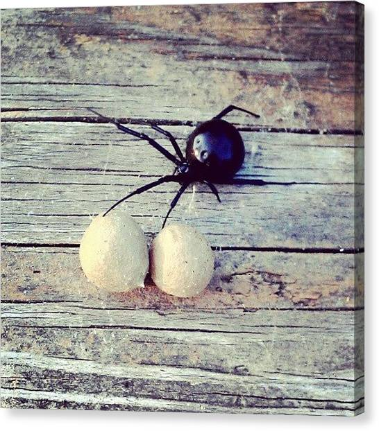 Spiders Canvas Print - Black Widow Spider. I've Never Seen by Emma Holton