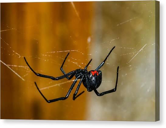 Black Widow Canvas Print - Black Widow Trap by David Waldo