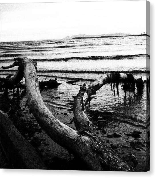 Ontario Canvas Print - #blackandwhite #lakesuperior #driftwood by Michael Squier