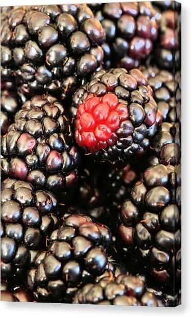 Blackberries  Canvas Print by JC Findley