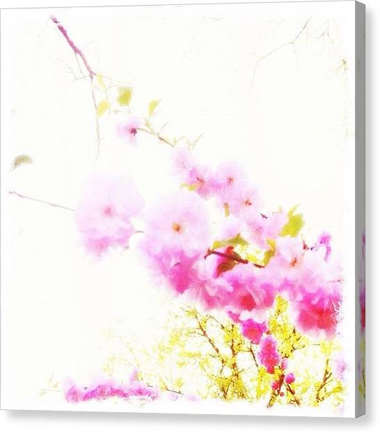 Manitoba Canvas Print - Bloom! by Jessica Mutimer