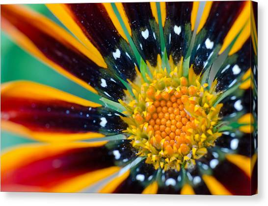 Canvas Print featuring the photograph Bloom Where You Are Planted by Margaret Pitcher