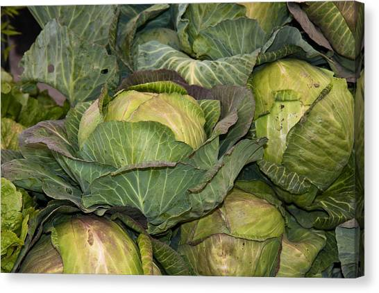 Blooming Cabbage Heads Canvas Print by Dina Calvarese