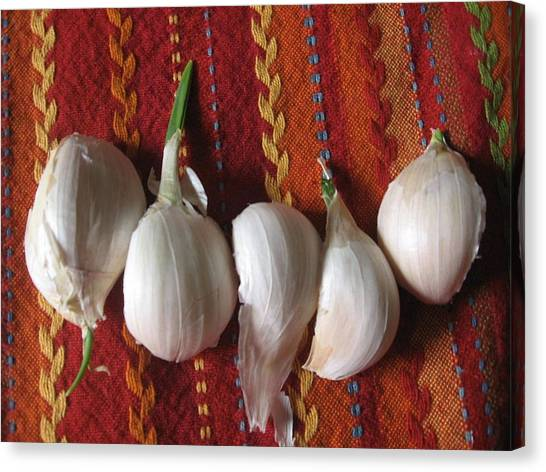 Blooming Garlic Bulbs Canvas Print