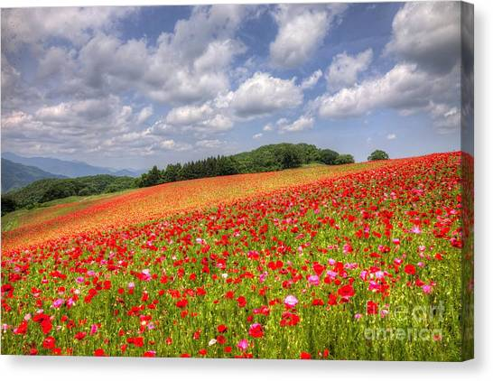 Blooming In The Plateau Canvas Print by Tad Kanazaki