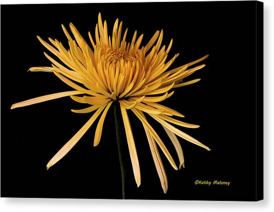 Blooming Yellow Canvas Print