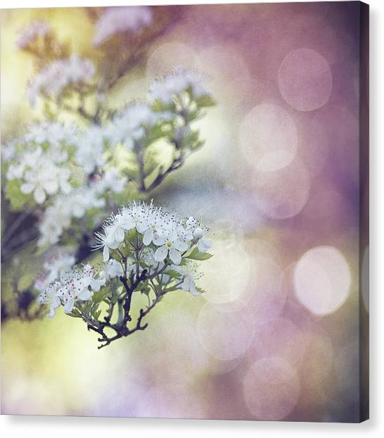 Blossom Canvas Print - Blossom by Joel Olives