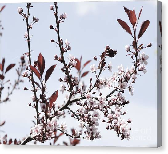 Blossoms In Time Canvas Print