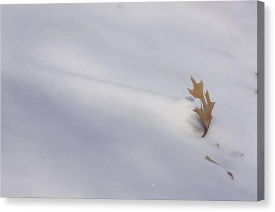 Blown Snow And Oak Leaf Canvas Print