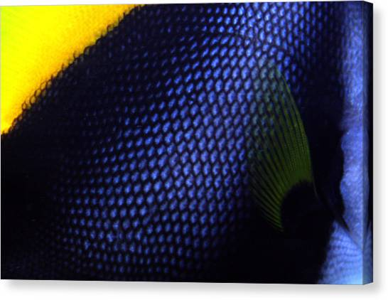 Blue And Yellow Scales Canvas Print