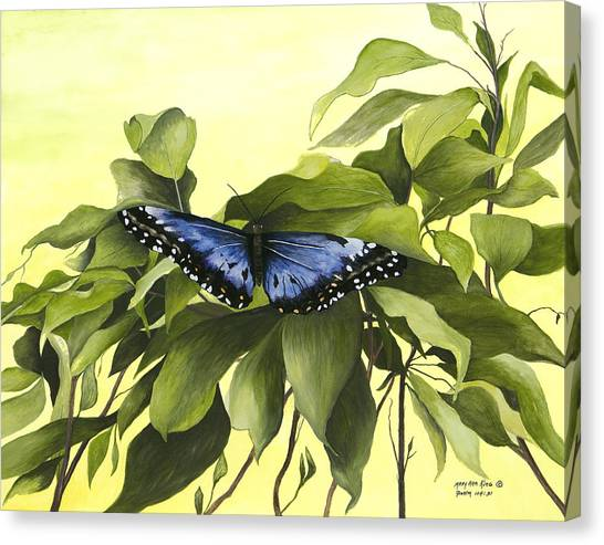 Blue Butterfly Of Branson Canvas Print