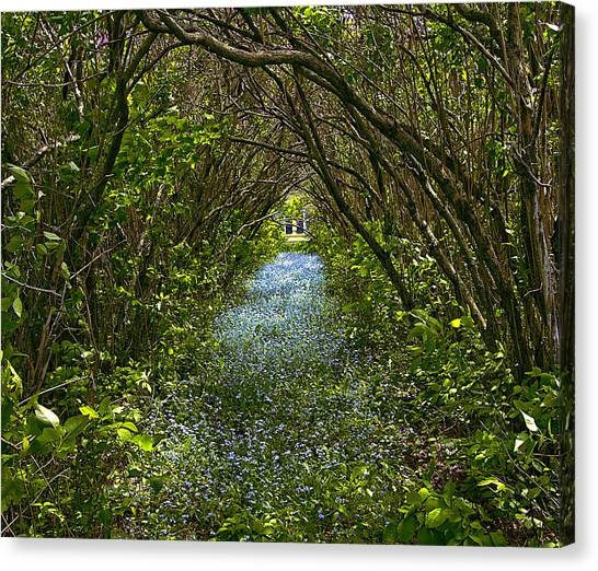 Blue Carpet In The Woods. Canvas Print