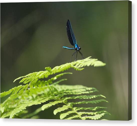 Blue Dragon Canvas Print by Al Cash