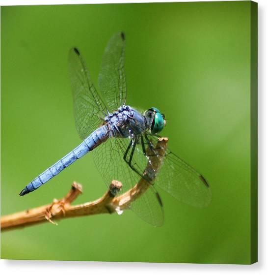 Blue Dragonfly Start Up Canvas Print by Meeli Sonn