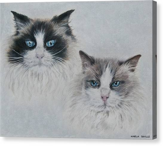 Blue Eyed Cats Canvas Print by Marla Saville
