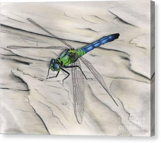 Blue-green Dragonfly Canvas Print