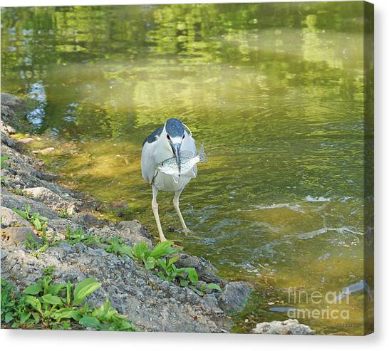 Blue Heron With Fish One Canvas Print