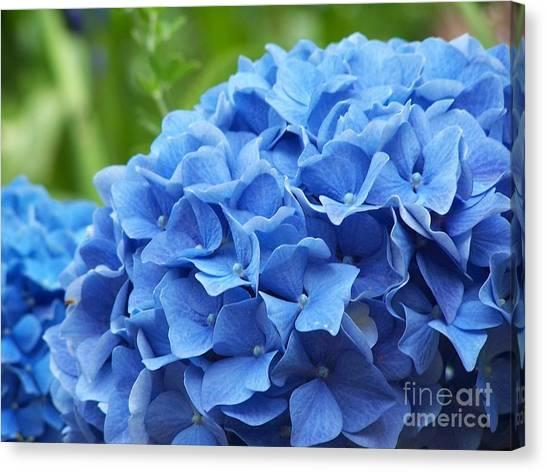 Blue Madeira Hydrangea Canvas Print by Patricia Land