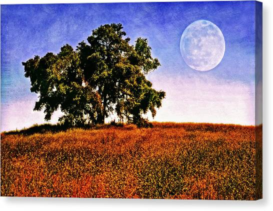 Canvas Print - Blue Moon Morning by Donna Pagakis