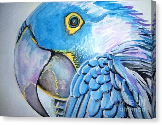Blue Parrot Canvas Print by Ken Huber