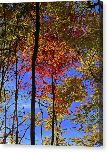 Blue Sky Autumn Canvas Print