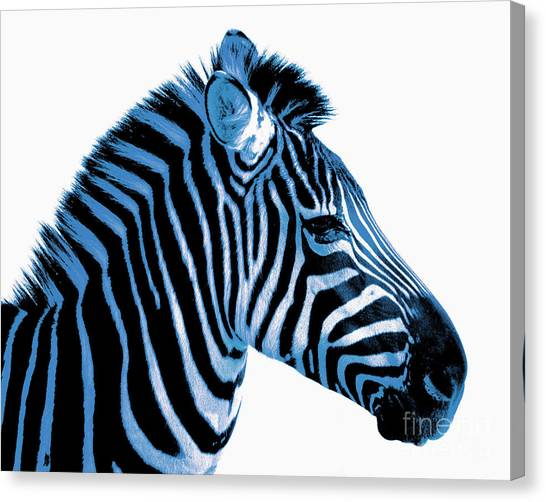 Zebras Canvas Print - Blue Zebra Art by Rebecca Margraf