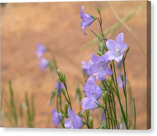 Bluebells And Red Rock Canvas Print