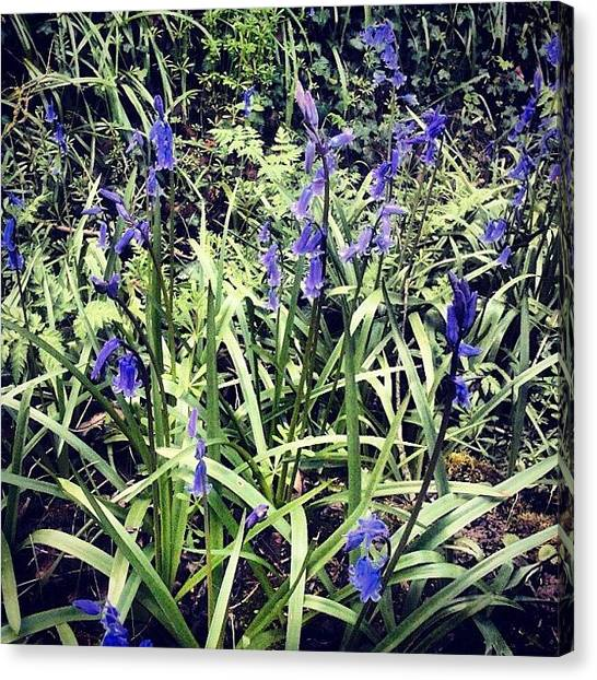 Woods Canvas Print - Bluebells by Nic Squirrell