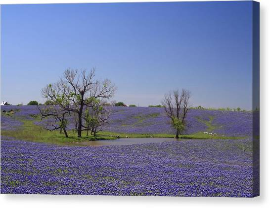Bluebonnet Acres Canvas Print