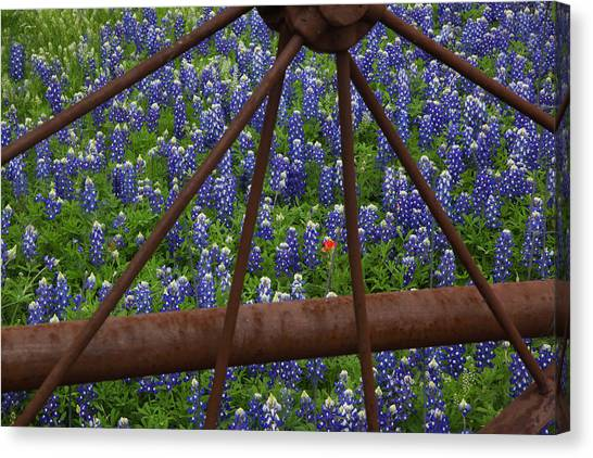 Bluebonnets And Rusted Iron Wheel Canvas Print