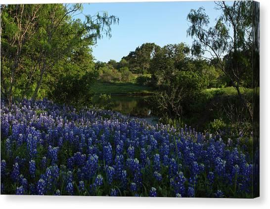 Bluebonnets At The Pond Canvas Print