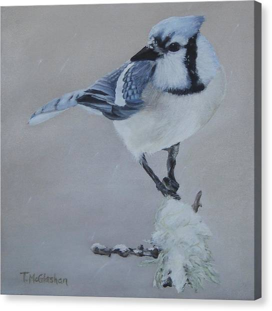 Bluejay In Winter Canvas Print by Traci McGlashan