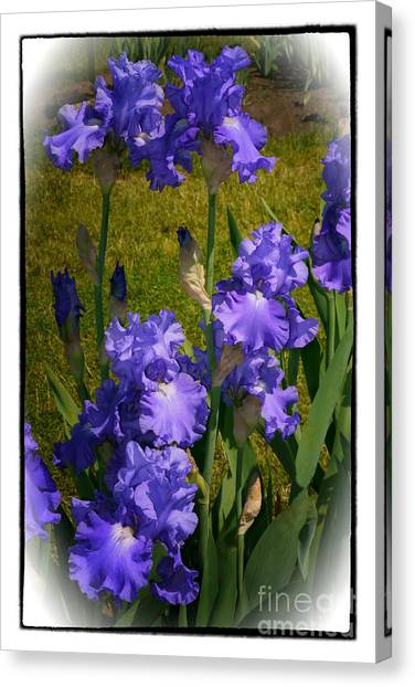 Bluest Of Blue 2  Canvas Print by Susan  Lipschutz