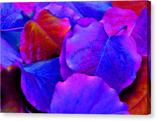 Bluish Purple And Pink Leaves Canvas Print by Sheila Kay McIntyre