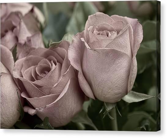 Blushed Rose Canvas Print