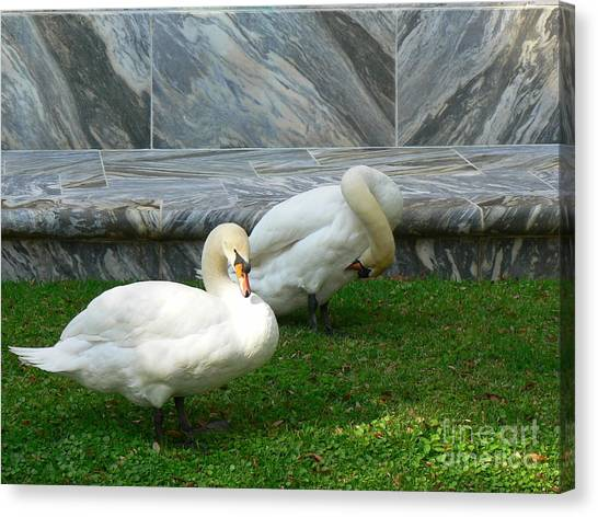 Bok Tower Swans Canvas Print
