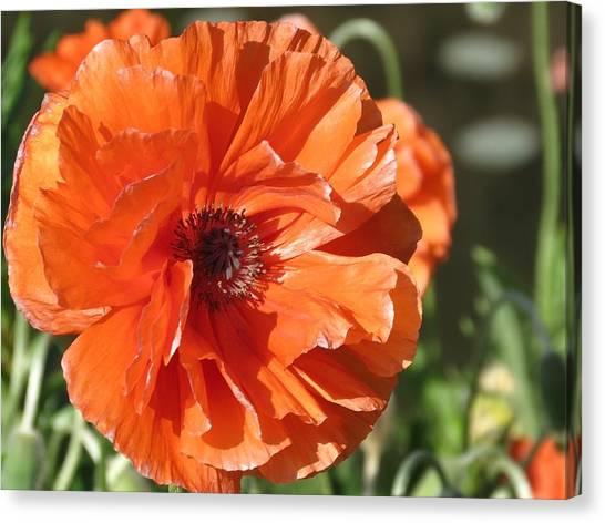Bold Orange Poppy Canvas Print
