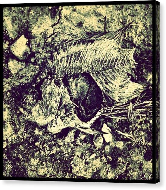 Fish Canvas Print - Bone Dry #huntingburg #bones #fish #art by Melissa Wyatt