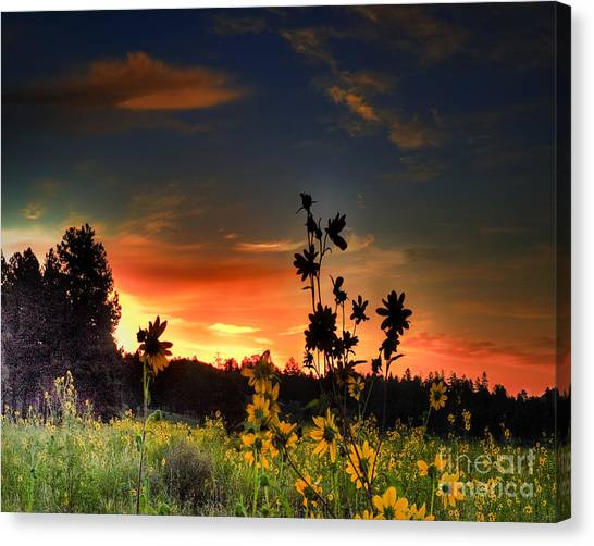 Van Goughs Ear Canvas Print - Bonita Meadow by Arne Hansen