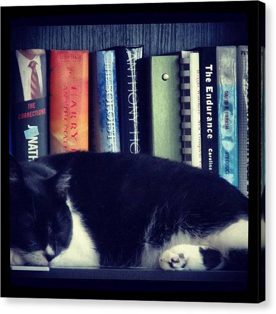 Libraries Canvas Print - Bookcat by Momo and Little Cat
