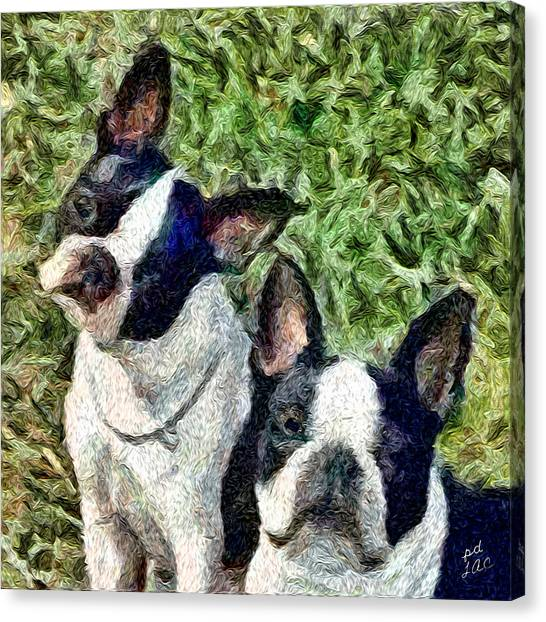 Boston Terrier Duo - Skipper And Dee Dee Canvas Print by Patty Dunlap and Laurence Canter